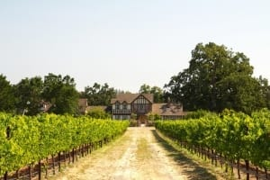 beautiful-house-in-a-vineyard-picture-id177401618